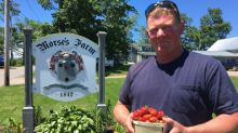 Farmer fears future after Sobeys rejects $24K worth of strawberries