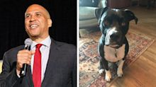 Cory Booker takes to social media to help find staffers' lost dog, kicking off search to #FindGumbo