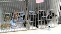 35 Pets Taken Away From Woman Accused of Animal Hoarding