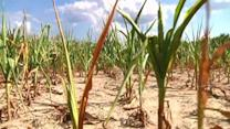 Drought now grips more than half of the nation