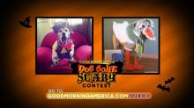 'GMA' Dog Gone Scary Contest Semifinals: Vote for Your Favorite Dog Costume!