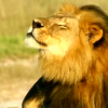 Brother of lion Cecil shot and killed