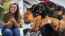 Heartwarming twist after eight puppies found dumped in bin