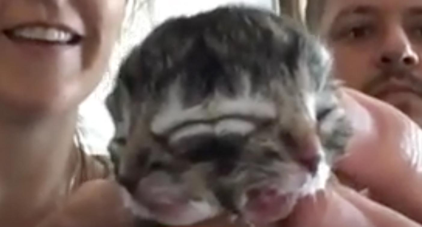 Rare kitten born with two faces