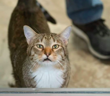 "Cat ""repeatedly"" breaks his friends out of animal shelter"