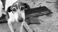 5 pasos básicos que debes seguir si rescatas a un animal de compañía