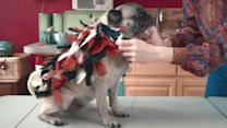 """This DIY Thanksgiving """"Turkey"""" Costume For Your Dog is Seriously Adorable"""