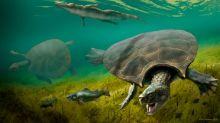 Los nuevos fósiles arrojan luz sobre la gigantesca tortuga con cuernos que habitó América del Sur