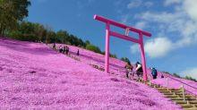 La collina Rosa in Giappone: lo spettacolo del parco Higashimokoto