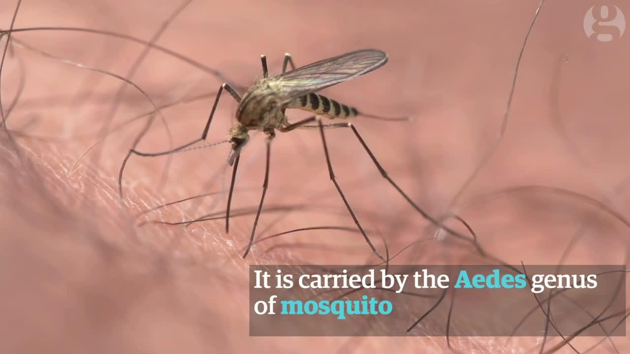 What You Need To Know About The Zika Virus In Brazil