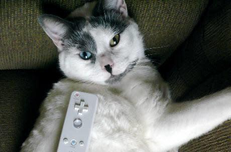 WiiKitty.com: not just stuff, but Wiimotes on your cat