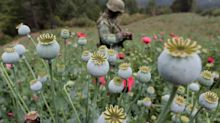 Mexico's poppy war: Mexican army fights opium surge feeding U.S. heroin demand