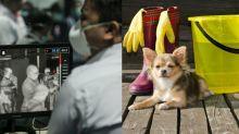 【武漢肺炎】內地媒體亂傳寵物會感染 疑引拋棄貓狗恐慌!3招讓毛孩在家放電+寵物消毒貼士