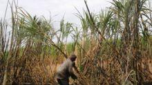 Afrique du Sud: des terres à louer pour relancer l'agriculture au sein de la population noire