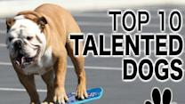 Top 10 Talented Dogs