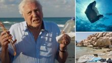 El efecto Attenborough reduce en un 53% el uso de plástico en solo 12 meses