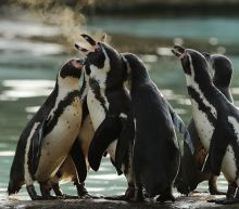 Even penguins marched (well, waddled) for science