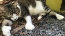 Hemingways Katzen werden zu Touristenmagneten