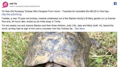 Tartaruga anda quase 10 quilômetros em busca de uma namorada