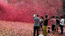 Incredible Sony Ad Blankets Valley with 8 Million Flower Petals