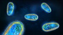 Jovem de 13 anos morre após contrair ameba que come cérebro na Flórida
