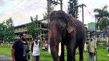 On World Elephant Day, Meet World's Oldest Asiatic Tusker Living King-sized Life in Assam's Tea Gardens