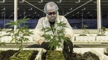 Marijuana stocks to watch: Aurora Cannabis investments may be more valuable than its pot