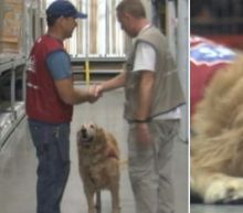 Veteran and His Service Dog Both Work at Home Improvement Store, Proudly Walking the Aisles