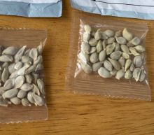 Mysterious seeds sent from China to the US identified by the USDA