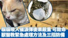 【催淚煙為禍】貓咪中招狂咳狂流淚 獸醫教應對方法