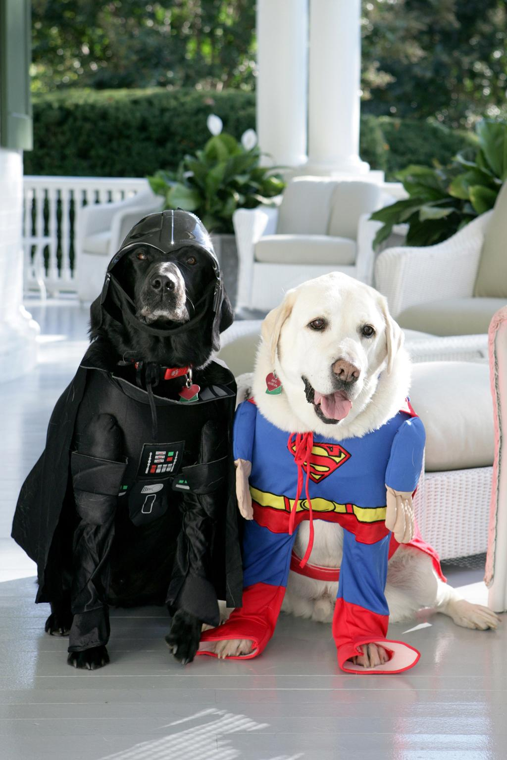In this handout photo provided by The White House,Vice President Dick Cheney's Labrador retrievers Jackson (L) and Dave sit for photos at the Vice President's Residence at the Naval Observatory dressed for Halloween October 31, 2007 in Washington, D.C. (Photo by via Getty Images)