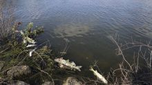 The Latest: Mayor: Officials delayed notifying city of spill