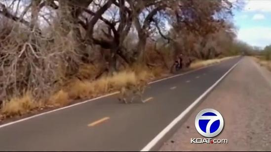 Drought, wildfires increase wild animal encounters