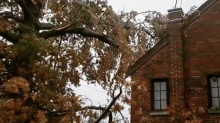 Ice Storm Takes Down Cincinnati Oak Tree a Branch at a Time