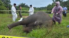 Endangered elephant decapitated by poachers