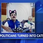 Cat filter accidentally applied to Pakistani politician's face during live stream
