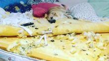 """Vira-lata Chico destrói cama de sua dona e vídeo viraliza: """"Você é um demônio"""""""