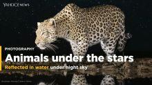 PHOTOS: Animals under the stars