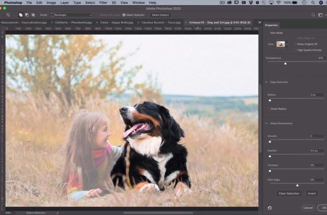 Adobe's advanced AI editing tools graduate to Creative Cloud apps