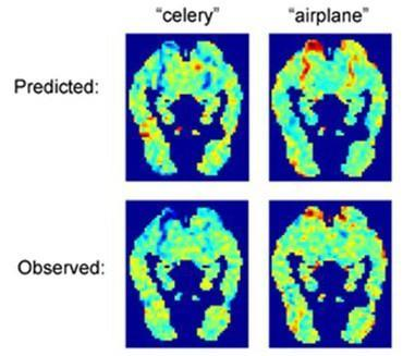 Computer designed to read thoughts from brain scans