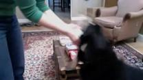 Dog Loves Perfume Sample