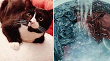 Cat 'just survives' 35-minute cycle after sneaking into washing machine