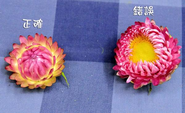 _DSC3472_副本.jpg