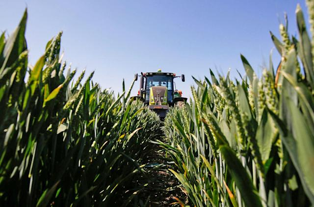 Monsanto bets on AI to protect crops against disease