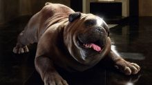 Is Marvel Inhumans' Lockjaw character the new Groot?
