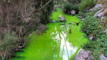 'Is this real?': Mystery after concerns over 'lime' green creek