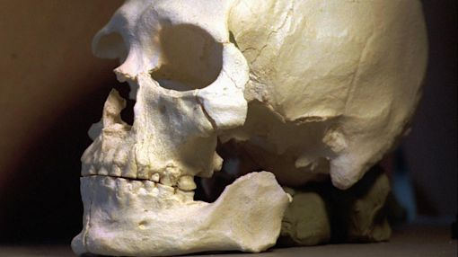 Where Kennewick Man Stands, 20 Years After Discovery