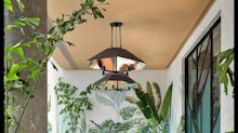 How the Monstera Became a Design Icon