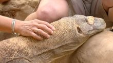 Meet the physical therapist who treats reptile arthritis