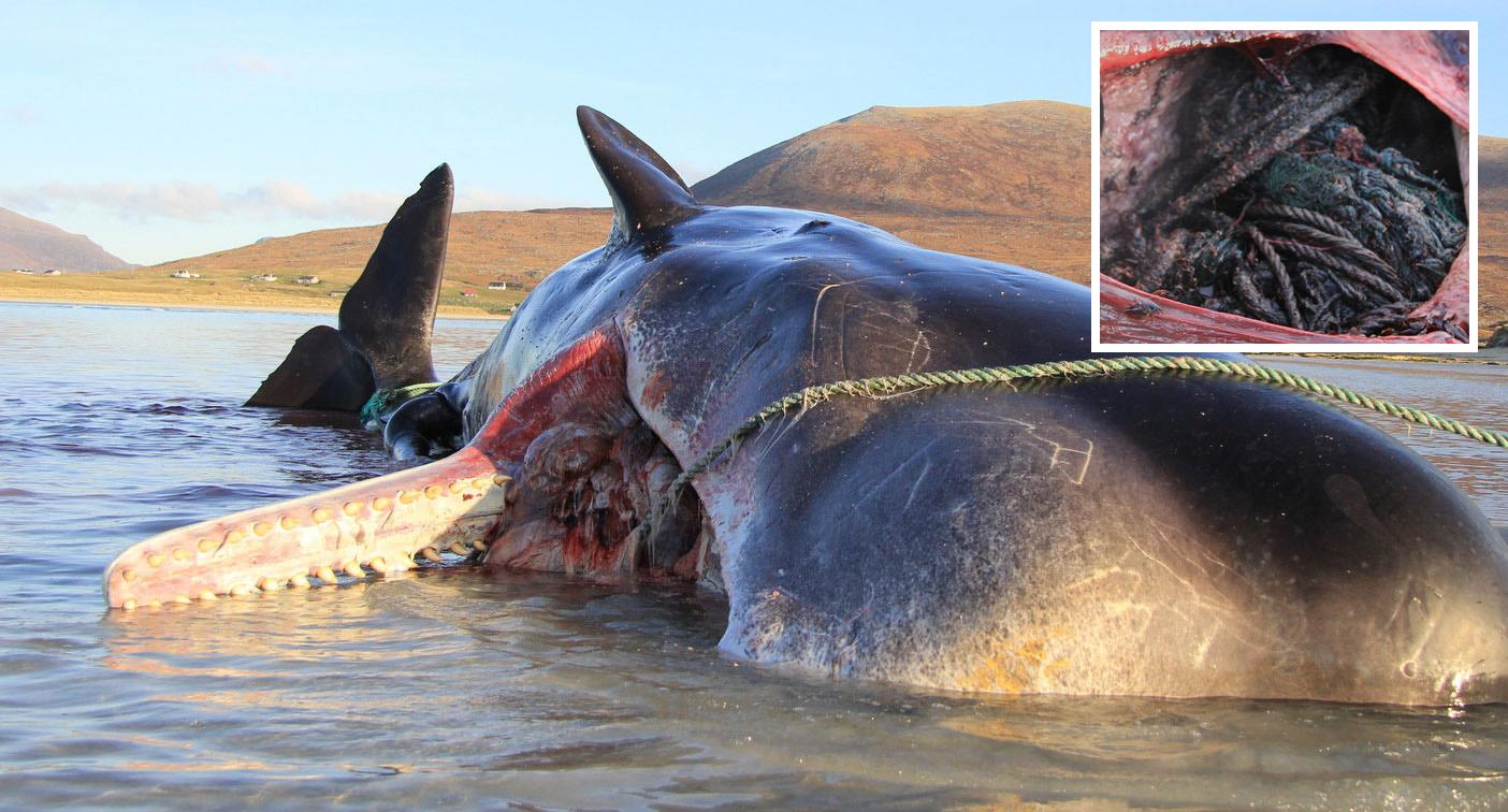 'Horrific' 100KG find inside whale washed up on beach